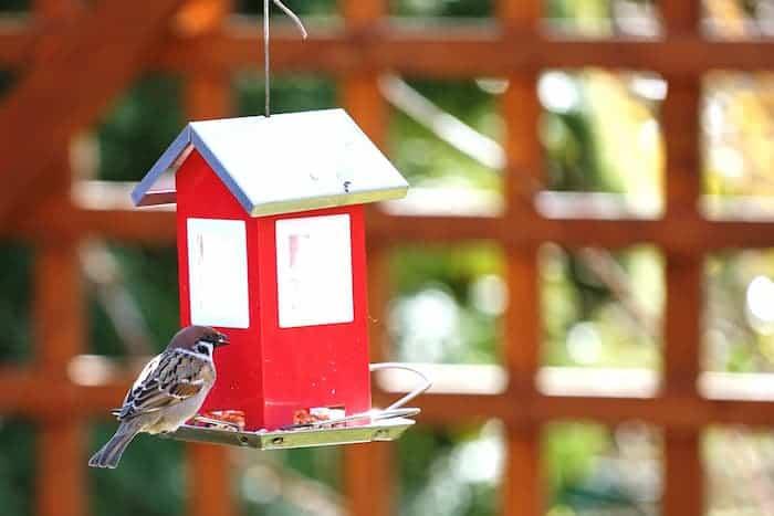 Balkon Dekorasyonu Kuş Yemliği