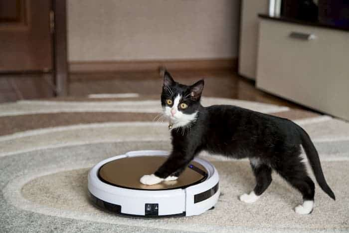 Robot Süpürge Kedi