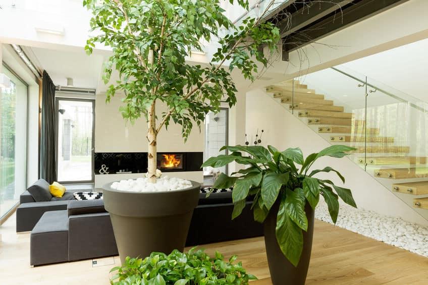 Büyük Salon Bitkileri