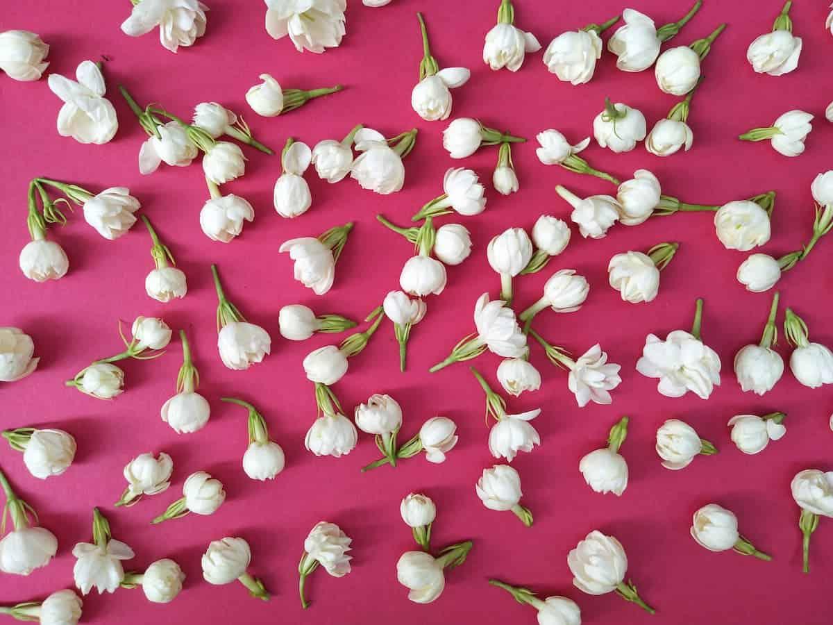 Yasemin Çiçekleri