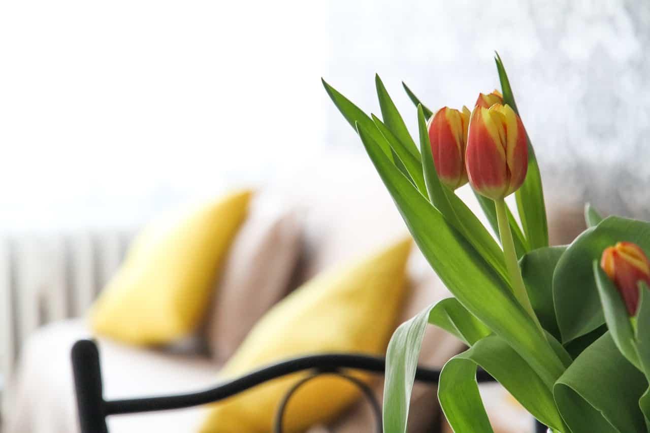 Evde Yetiştirilebilecek Çiçek Çeşitleri