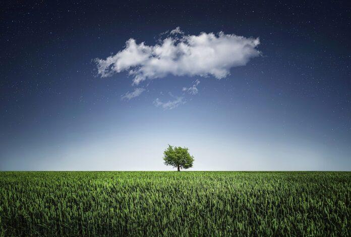 Çim ve Ağaç