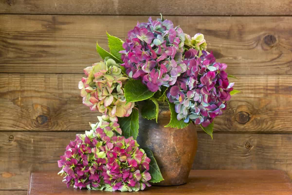 Vazoda Ortanca Çiçeği