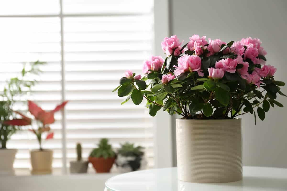 Balkonda Yetişen Çiçekler