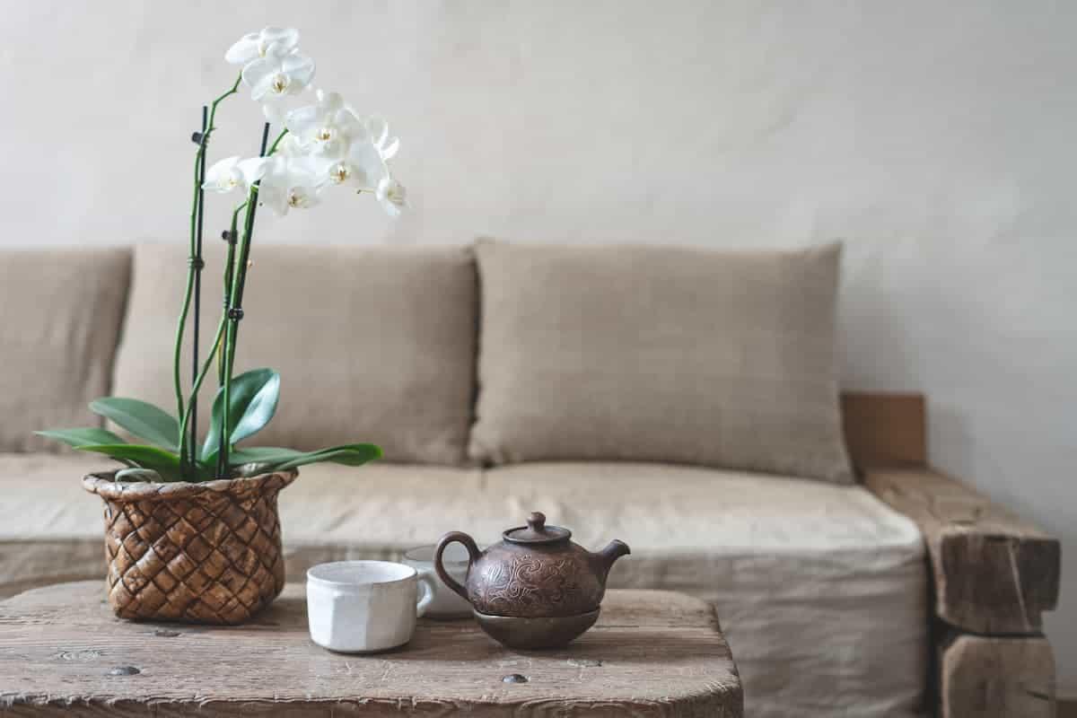 Sehpa Üzerinde Beyaz Orkide