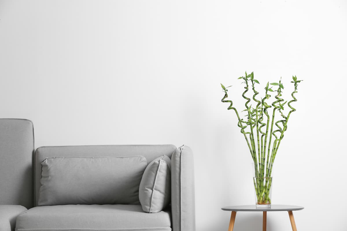 Bambu Çiçeği Yetiştirme