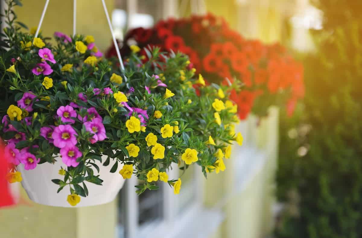 İçinizi Açacak Balkon Çiçekleri