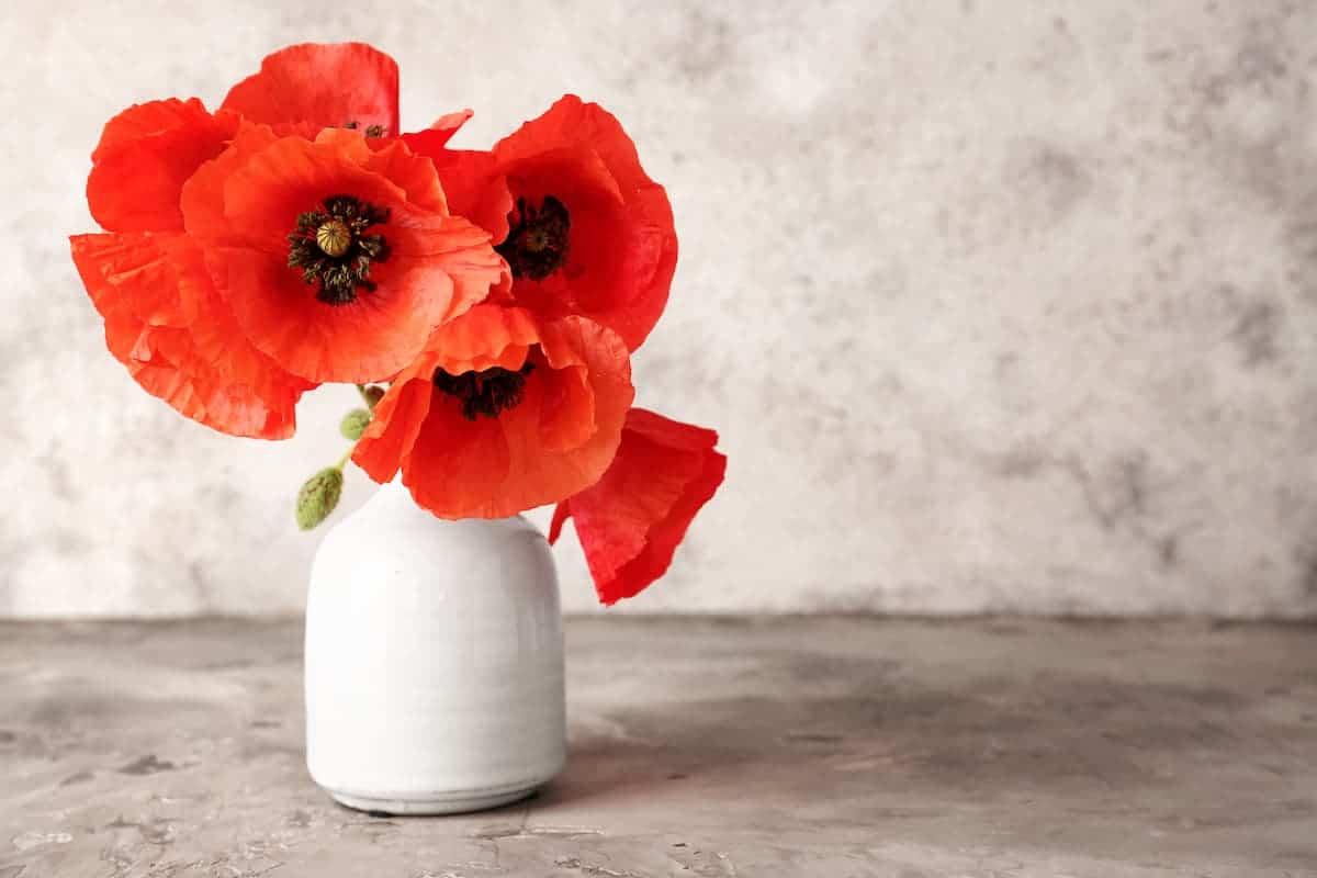 Gelincik Çiçeği Anlamı ve Özellikleri