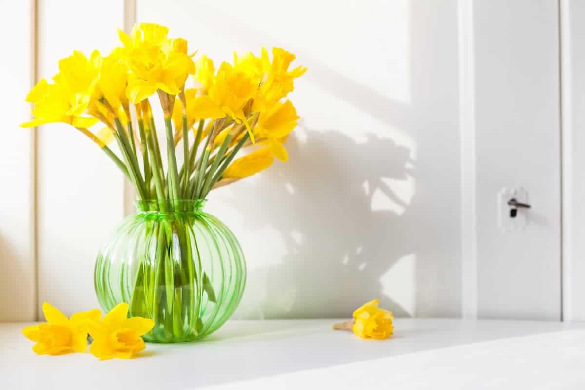 Nergis Çiçeği Bakımı ve Anlamı